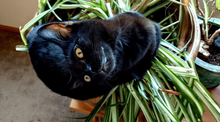cat sitting in spider plant indoors