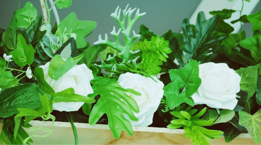 plants on shelves indoors