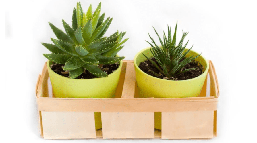 succulents in growpots and bamboo packing crate for shipping