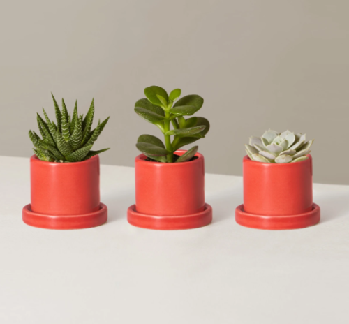 Trio of succulents in planters from The Sill