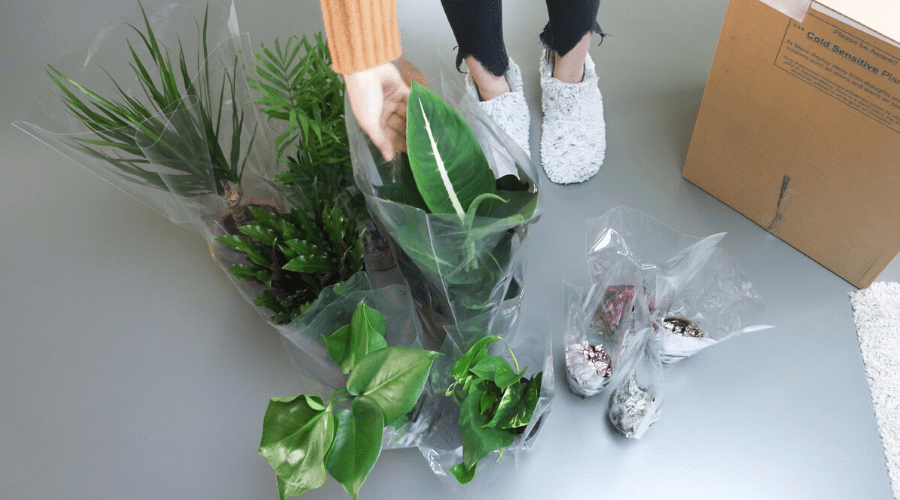 flat lay of houseplant unboxing on gray floor in slippers