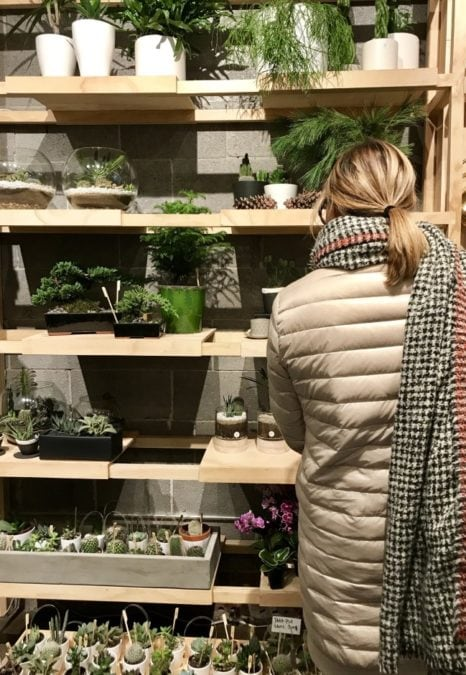 houseplants in cold weather woman in coat and scarf shopping for indoor plants in winter