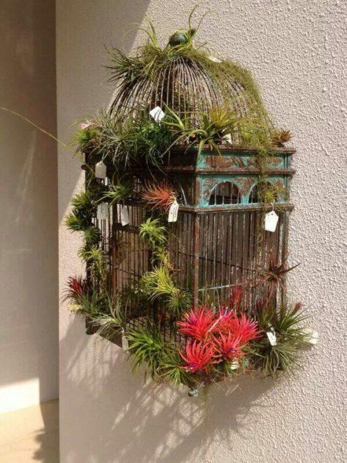 airplant tillandsia display bird cage idea