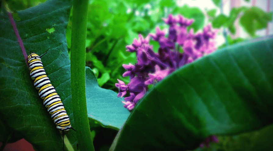caterpillar on potted plant with foliage and flower in background