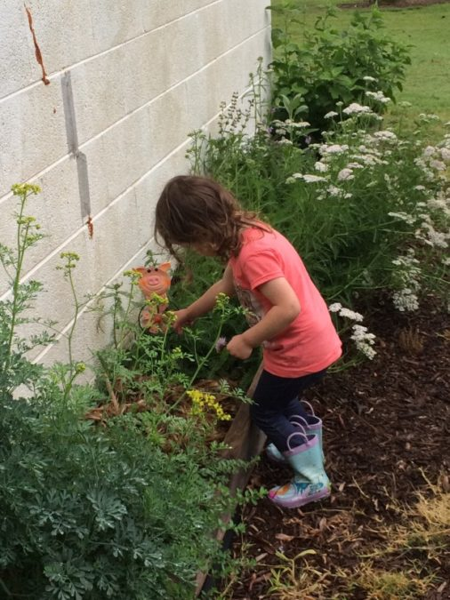 backyard herb garden with girl picking chive blossoms