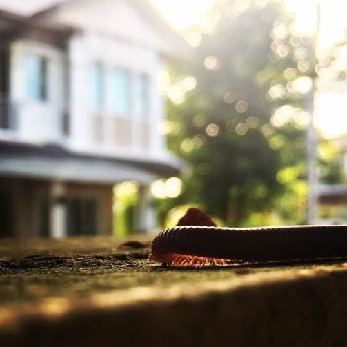 millipede in foreground on wood with house in background