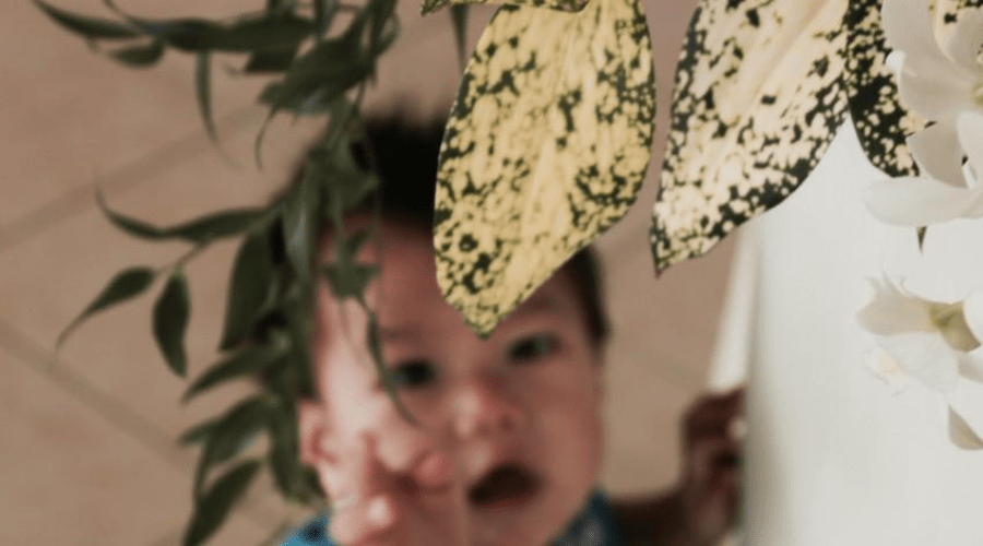 dumb cane on high shelf out of reach of child indoors