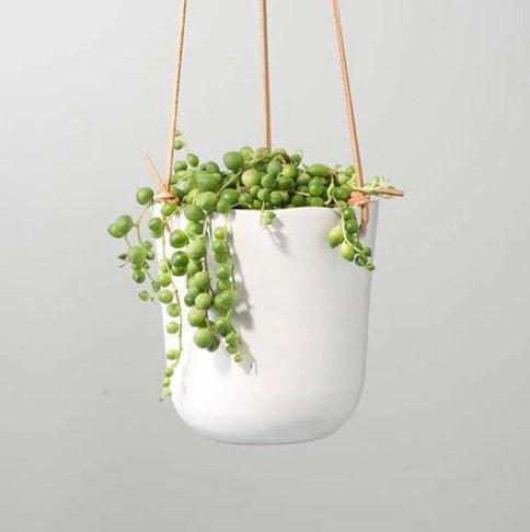 Buy at Plants.com