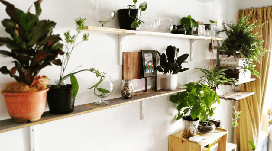 diy plant shelves hanging in home living room office