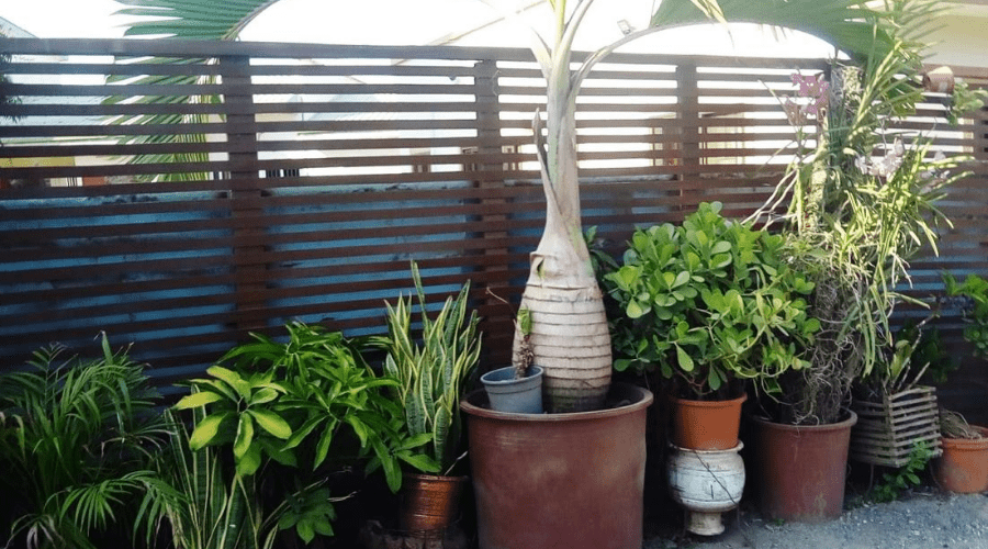 indoor plants on patio for warm weather months