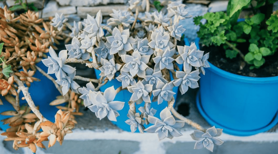 succulents do well outdoors in summer months