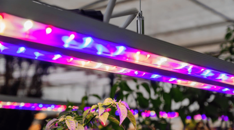 led grow lights in an greenhouse