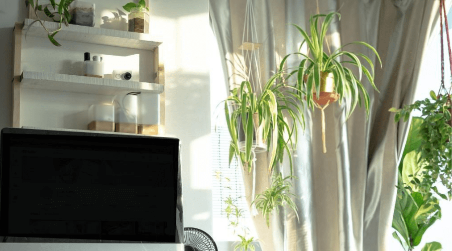 bright living room with hanging plants