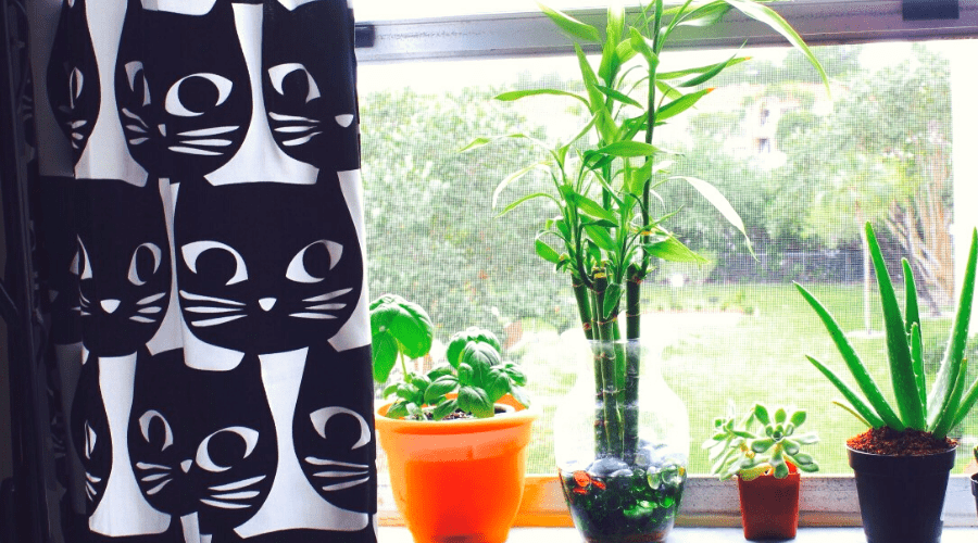 an arrangement of houseplants on a windowsill with cat curtains and mismatched planters