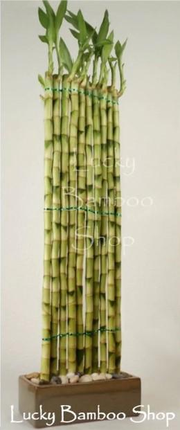 Buy at Lucky Bamboo Shop