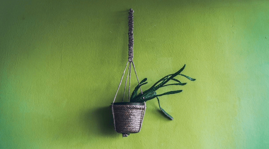 DIY macrame plant hanger with christmas cactus on green wall