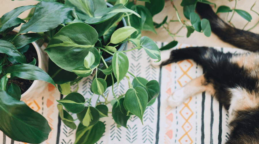 identifying houseplants by leaf size and shape