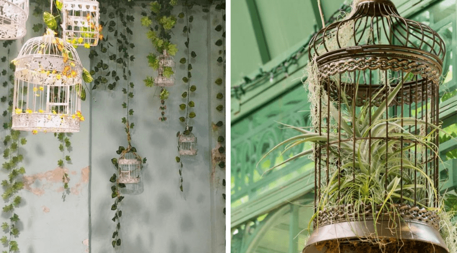 plants in bird cages for display