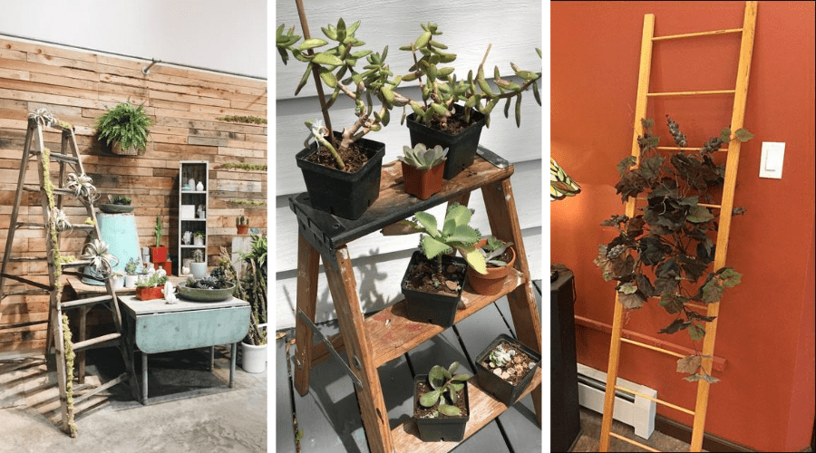 plants on ladders in different styles for display ideas