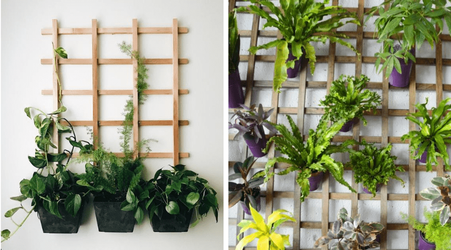 plant display ideas 12 trellis indoor plant hanger