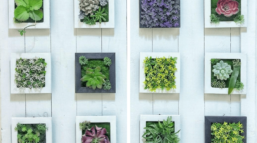 plant display ideas picture frame succulents living wall art