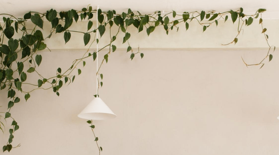 plant display ideas 2 kitchen ceiling climbing plant