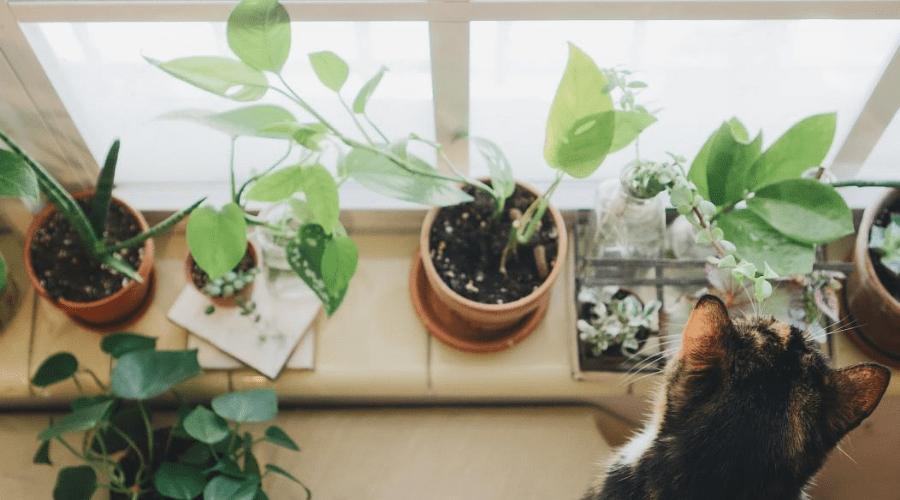 plant display ideas 3 windowsill plants with cat pet tax