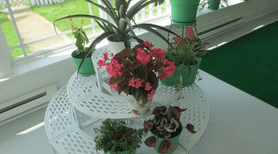 plants arranged on serving stand in enclosed porch sunroom