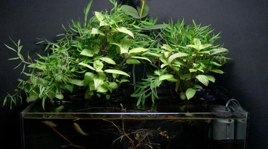plant display idea fish tank planter