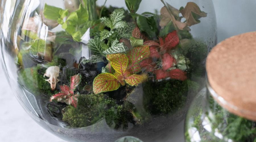 terrarium plant display idea