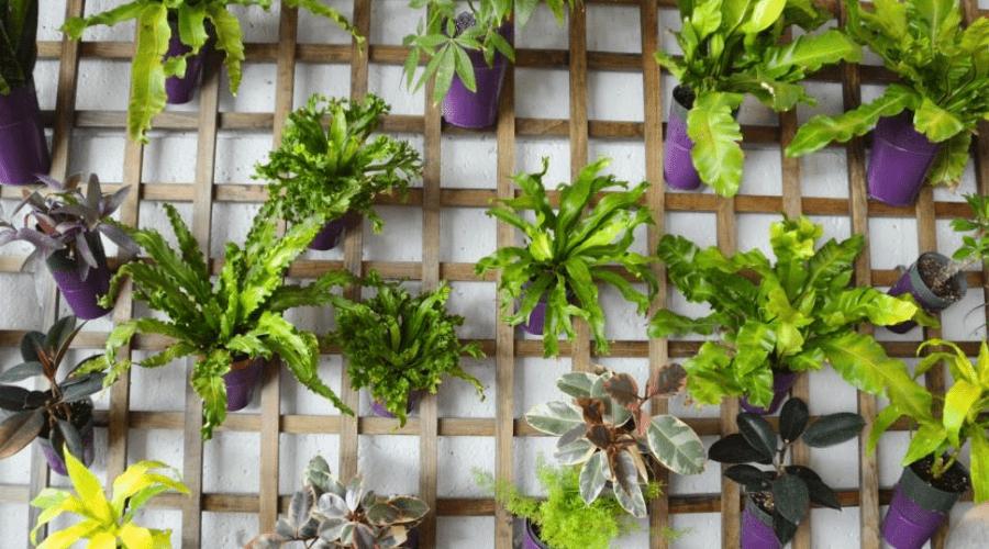 plant display ideas trellis hanging display large