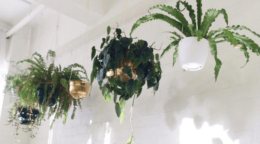 indoor plant hangers in multiple styles with houseplants