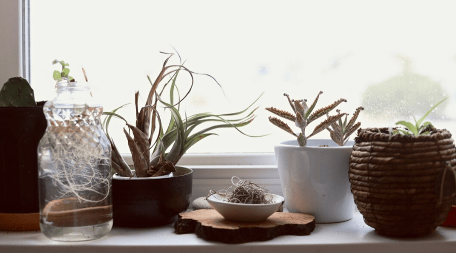 plant window shelf diy many plants in small planters sit on a shelf in front of a windwow