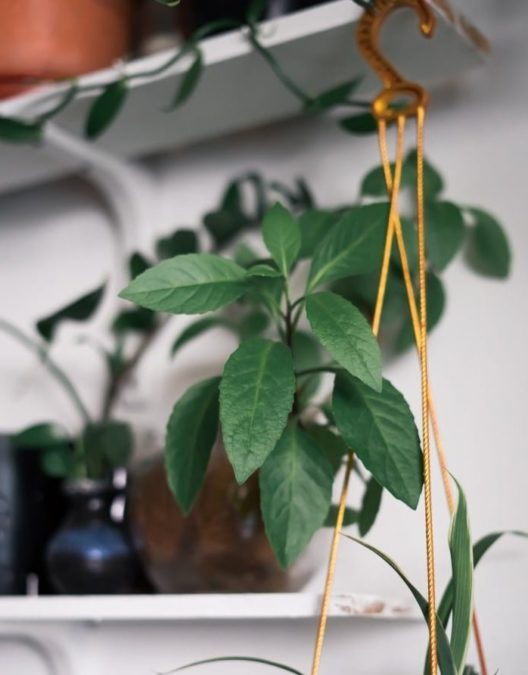 diy plant shelf for walls or windows with plants and hanging planters