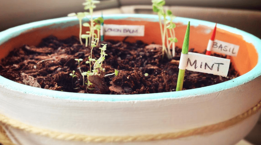 growing many herbs in one container for small spaces