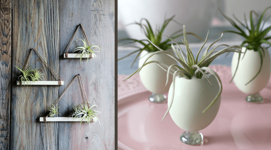 air plant display ideas simple shelves egg plant display