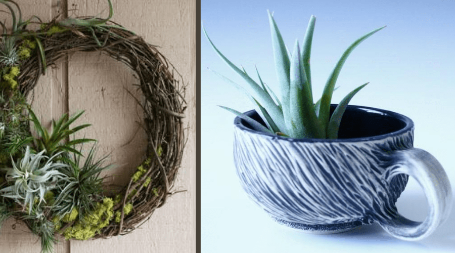 air plant display ideas mossy wreath and china teacup planter