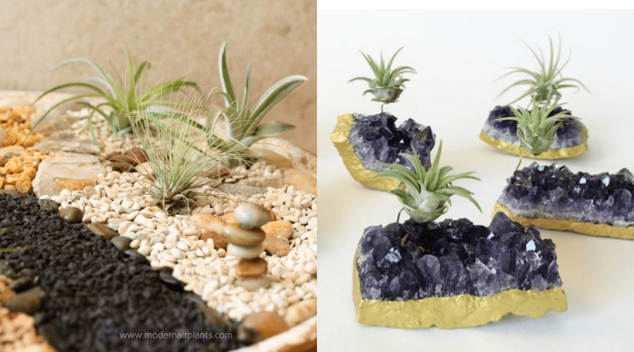 air plant zen garden and amethyst crystal geode foiled display