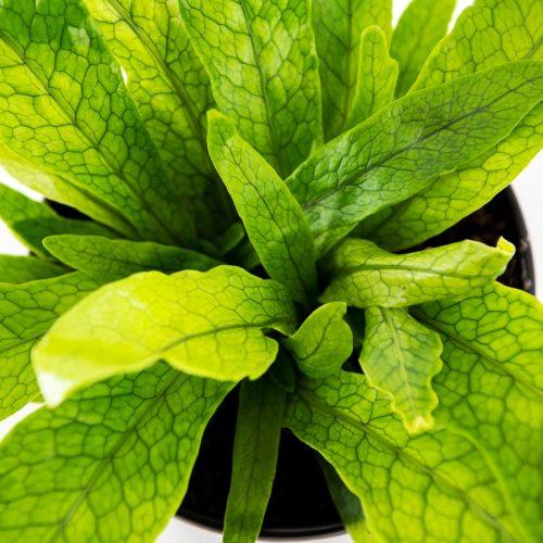 Buy at American Plant Exchange