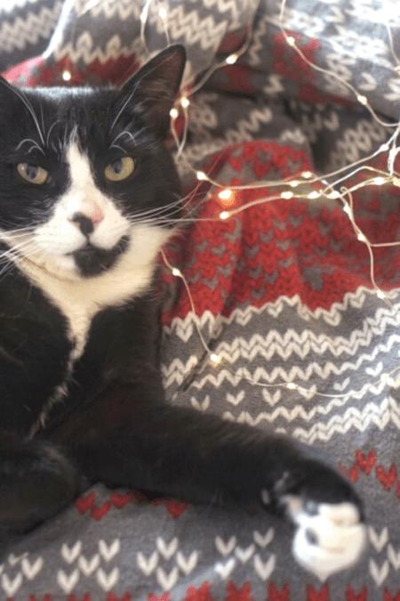tuxedo cat on knit print blanket with white LED Christmas lights