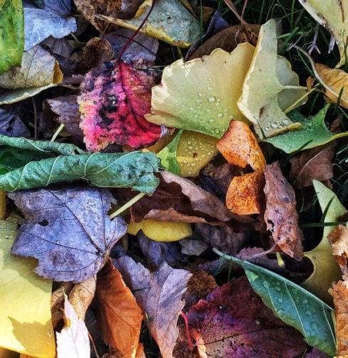 autumn, leaves, fall, dried leaves, fall leaves, raking, leaf pile, earth tone