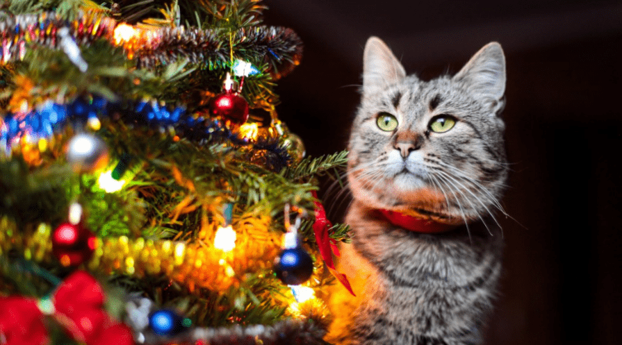 cat on dark background beside decorated lit christmas tree