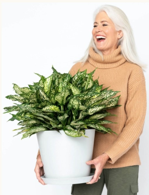 Buy at Bloomscape