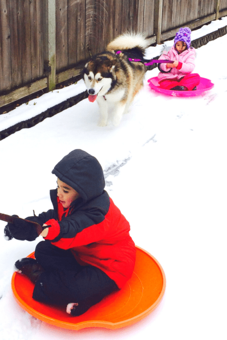 kids sliding near fence as dog pulls