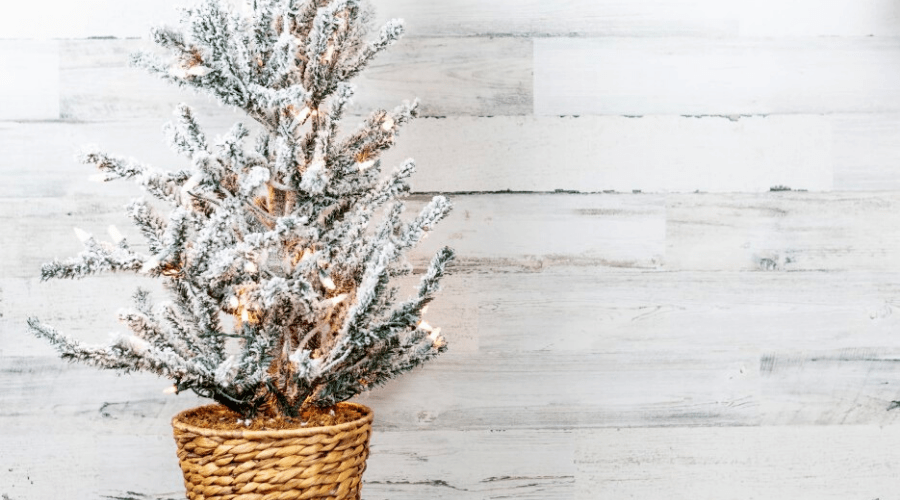 flocked christmas tree glamour shot shiplap background