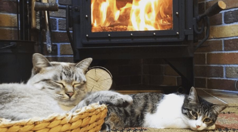 how to use a fireplace cat tax