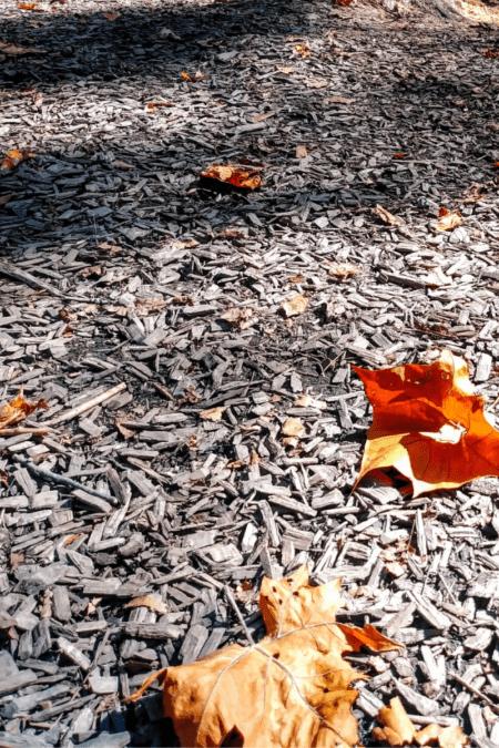 leaf raking hacks tall mulch unlight revealing the dried fallen autumn leaves on top of mulch