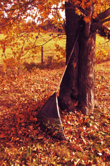 rake leaning against a tree in autumn with leaves on the ground