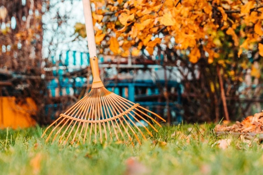 aking fall leaves with rake in the yard. spring clean in garden back yard.