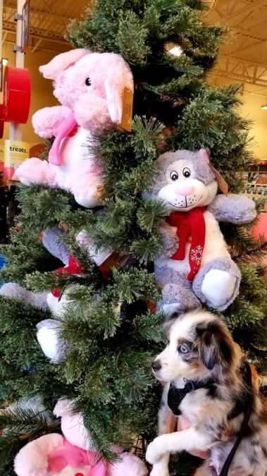 donation tree for organization with stuffed animals for children